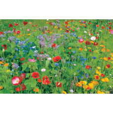 Colour Boost 1 Wildflower Mix - High impact annuals