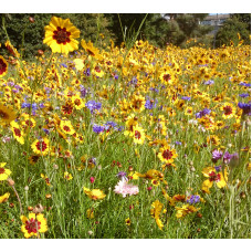 Colour Boost 2 Wildflower Mix - High impact low-grow annuals