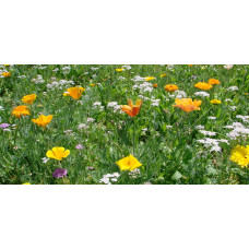 Colour Boost 3 Wildflower Mix - High impact perennials